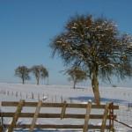 Winter 2012/13