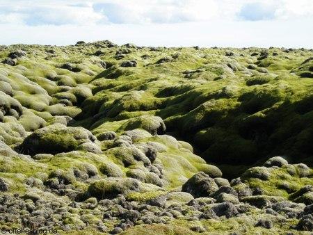 Island Moosfelder